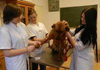 Obcinanie pazurów psa